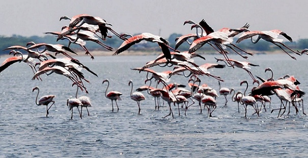 pulicat-lake_chennai-tourist-places