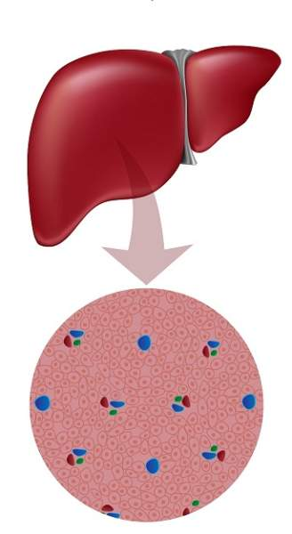 Best Ways to Keep Liver Healthy