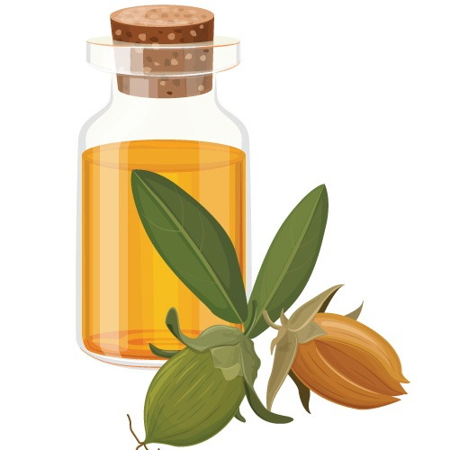 Ayurvedic Oils To Prevent Hair Fall - Jojoba Oil