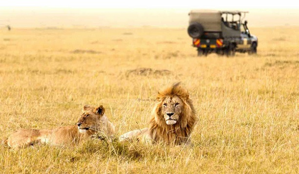 gir-forest-national-park_gujarat-tourist-places