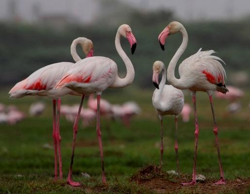 bird sanctuaries in india10
