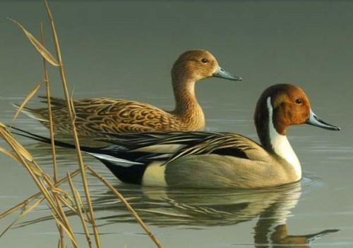 bird sanctuaries in india13