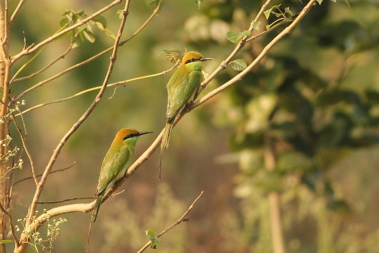 bird sanctuaries in india6
