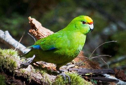 bird sanctuaries in india9