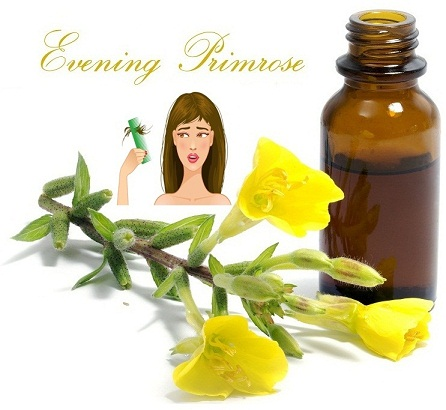 evening primrose oil for hair