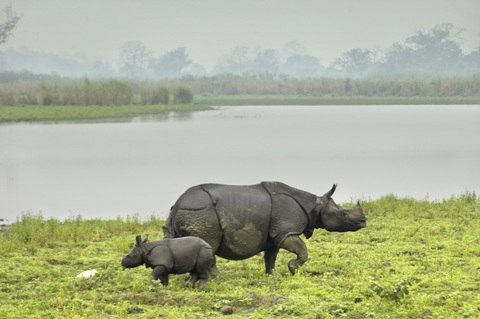 national parks in india5