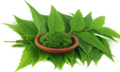Neem Leaves For Hair