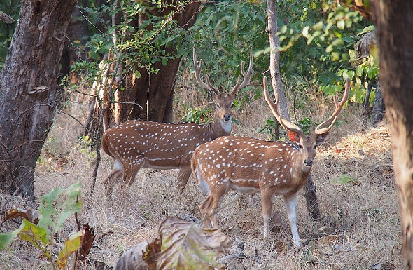wildlife-sanctuaries-in-india_gir-sanctuary