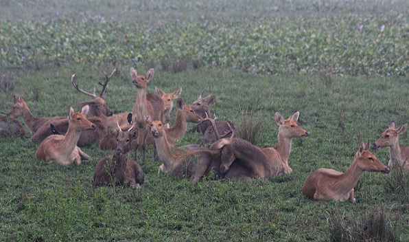 wildlife-sanctuaries-in-india_kaziranga-national-park