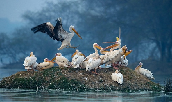 wildlife-sanctuaries-in-india_keoladeo-ghana-national-park
