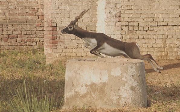 wildlife-sanctuaries-in-india_krishna-wild-life-reserve