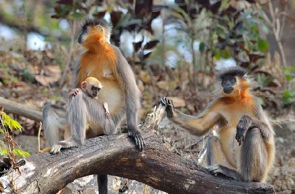 wildlife-sanctuaries-in-india_manas-sanctuary