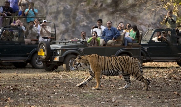 wildlife-sanctuaries-in-india_ranthambore-national-park