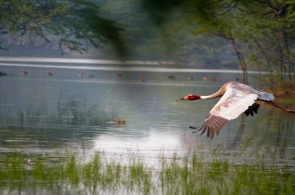 wildlife-sanctuaries-in-india_sultanpur-bird-sanctuary