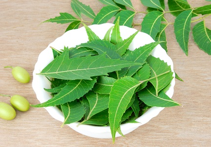 neem-leaves-to-remove-dandruff-permanently