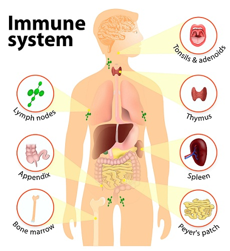 Top 15 Ways to Improve your Immune System