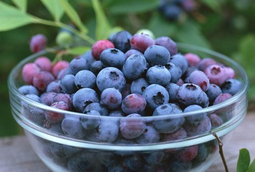 fruits to eat when pregnant blueberries