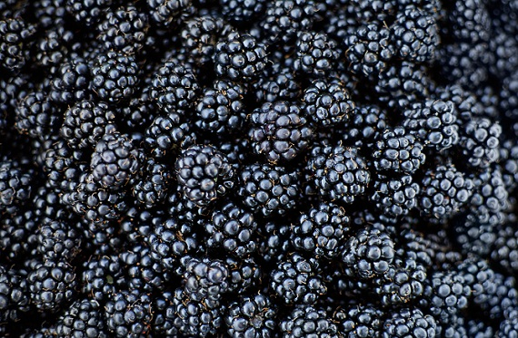 Best Fruits For Diabetics Type 2 Black berry