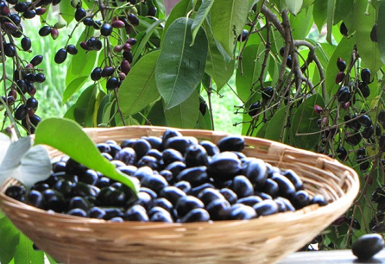 Can Diabetics Eat Black Jamun Fruit