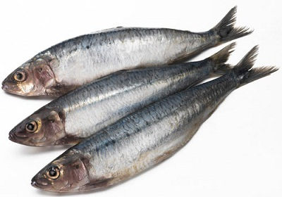Bone Growth Foods Sardines