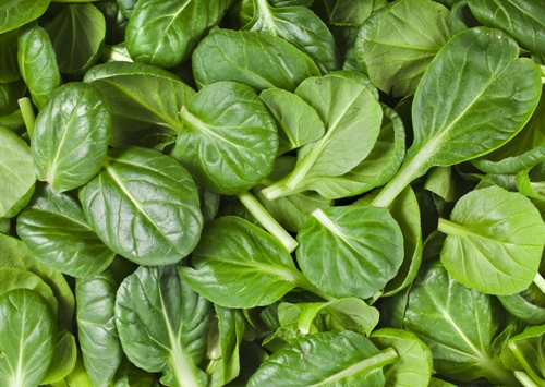 Bone Strong Food Spinach