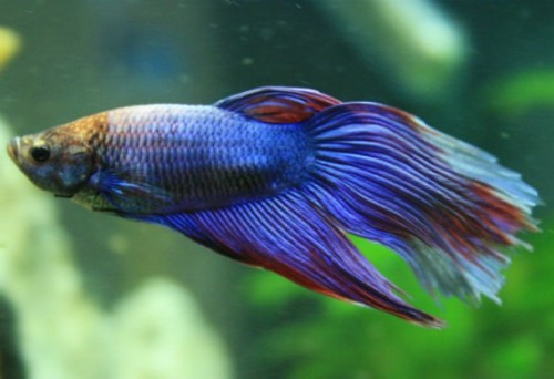 40 Different Types Of Fish Species In World And Their Facts