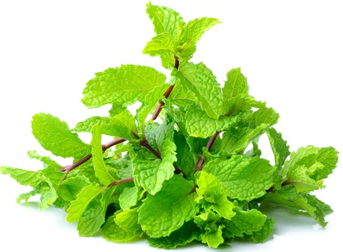 mint leaves 6