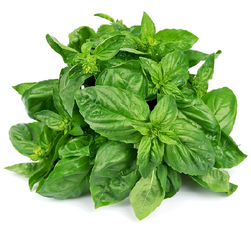 Check Out Benefits and Risks of Eating Basil During Pregnancy