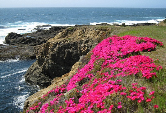 Best and Cheap Honeymoon Places--Mendocino