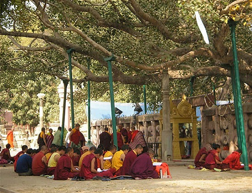 Bodhi Tree