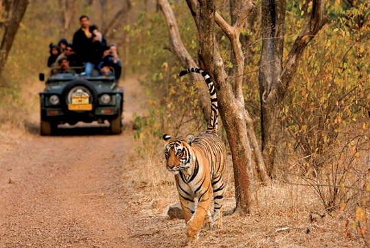 Honeymoon Places In India In September-Ranthambore