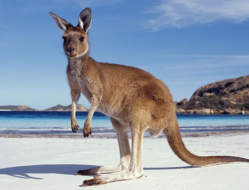 Honeymoon Places in Australia Kangaroo Island