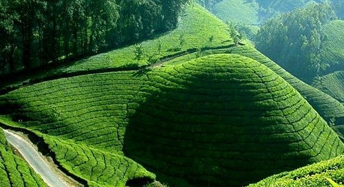 Honeymoon Destinations In Munnar