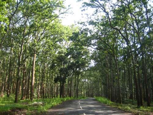honeymoon places in Jharkhand Netarhat