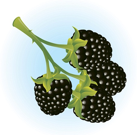 blackberries during pregnancy