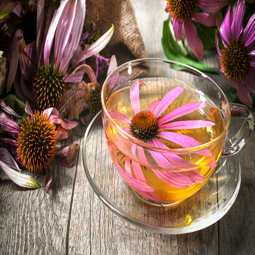 Echinacea during pregnancy 2