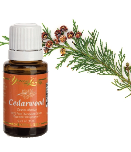 Essential-oils-to-avoid-during-pregnancy-Cedarwood