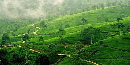 Honeymoon Destinations In Sri Lanka-Nuwara Eliya