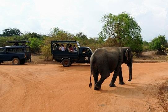Honeymoon Destinations In Sri Lanka-Yala National Park