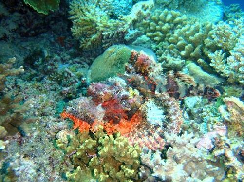 Honeymoon Places In Maldives - Bluetribe Moofushi