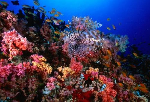 Honeymoon Places In Maldives - HP Reef
