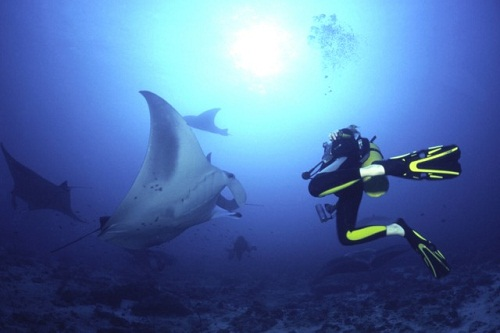 Honeymoon Places In Maldives - Manta Point