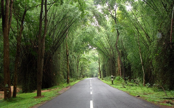 honeymoon-places-near-bangalore_wayanad