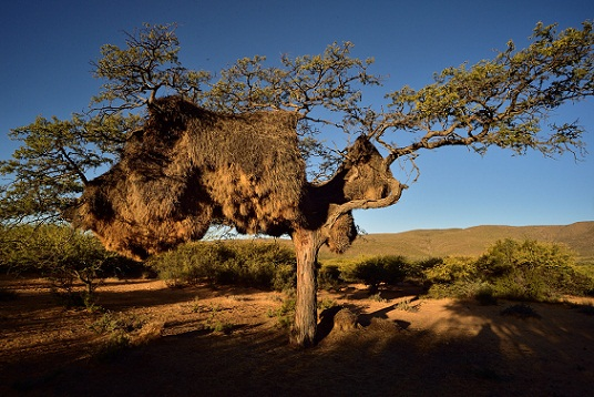 Honeymoon Places in South Africa--Northern Cape