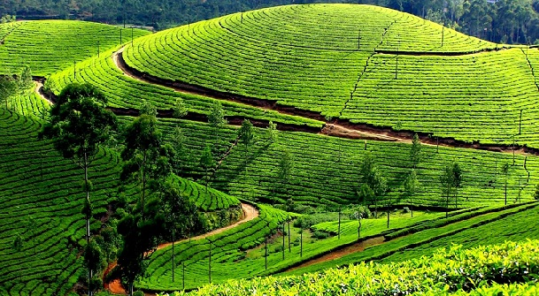 honeymoon-places-on-a-budget_ooty-tamil-nadu
