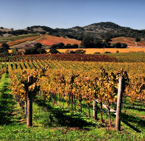 Honeymoon places in California California wine in Sonoma or Napa Valley