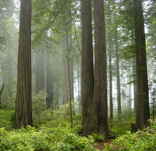 Honeymoon places in California Redwood National Park, Crescent City