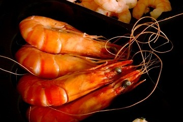 Can you eat Shrimp while Pregnant