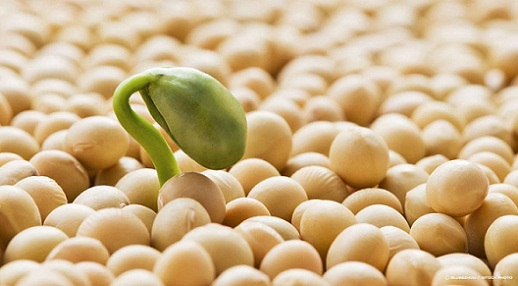 Soy Foods Not To Eat While Breastfeeding