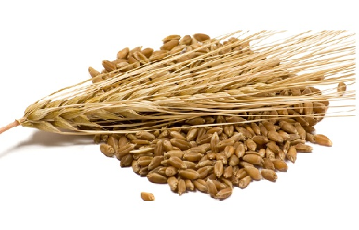 Breast Milk Producing Foods Barley